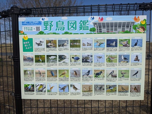 野鳥図鑑@新横浜公園