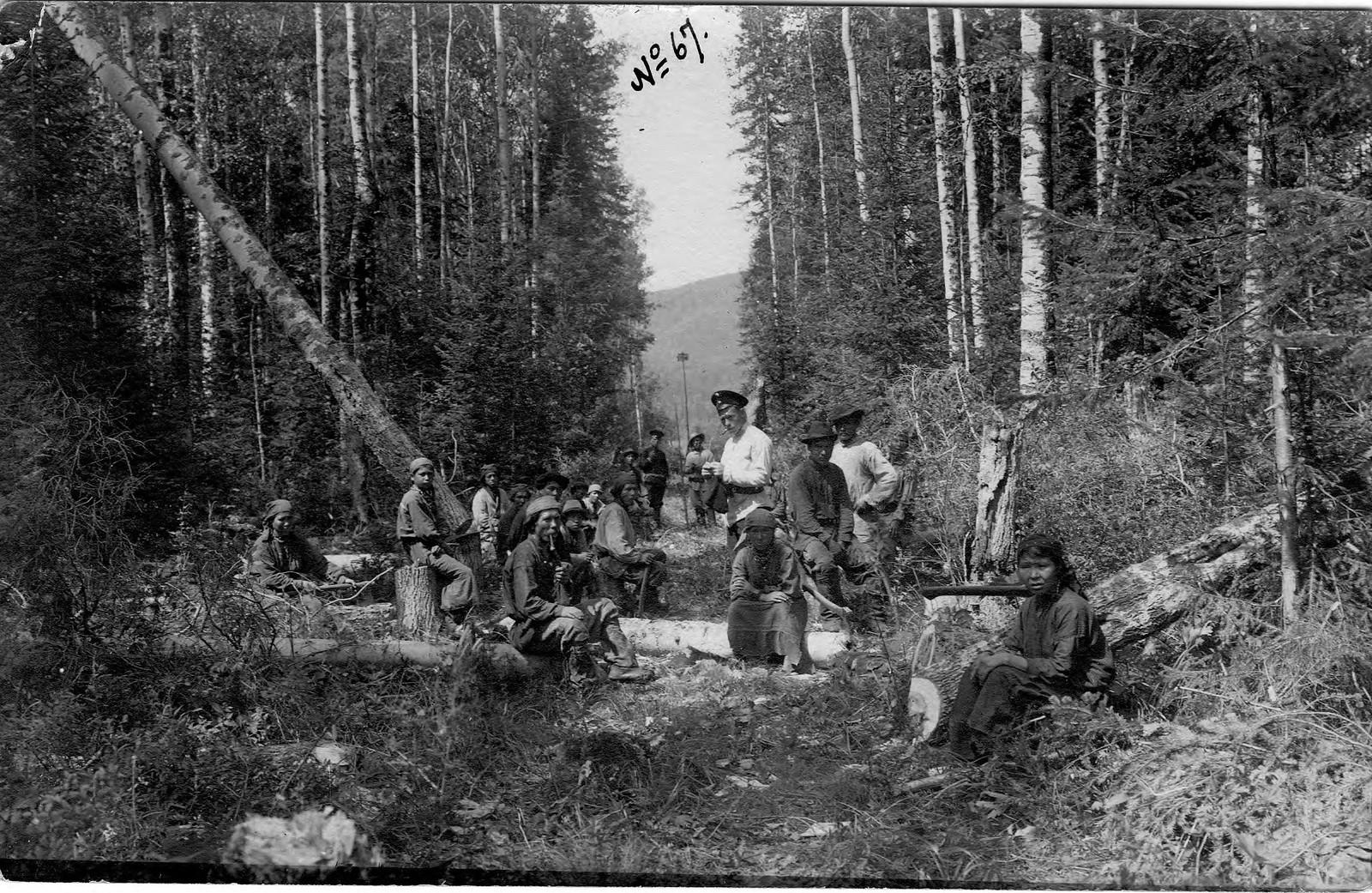 Прокладка просеки. Шорские мужчины и женщины при рубке деревьев