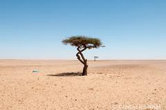 Western Sahara south of Dakhla - the water hole