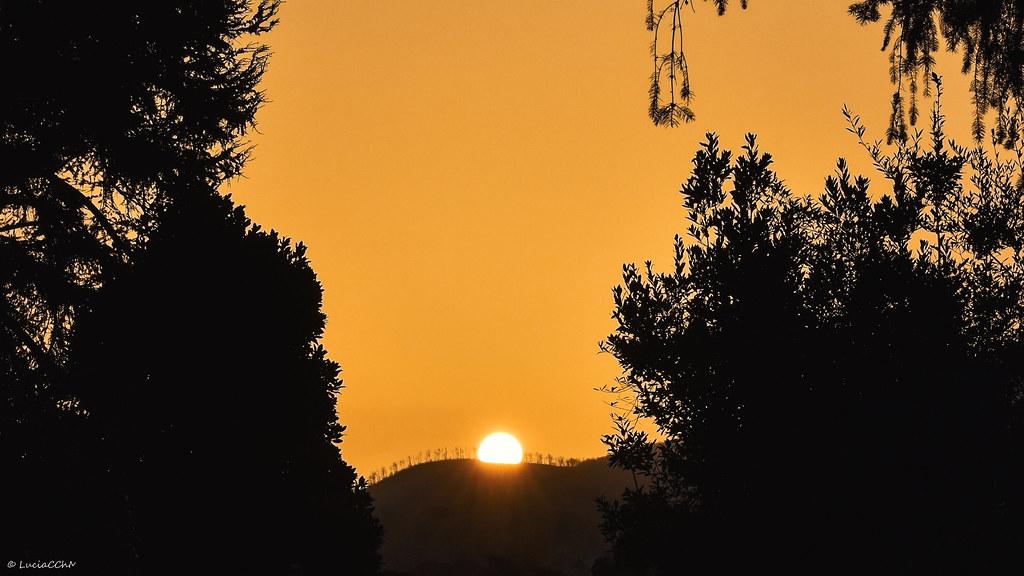 Sunrise Silhoutte in window trees - nature