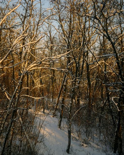 В зимнем лесу / In winter forest