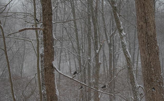 6 birds in the snow