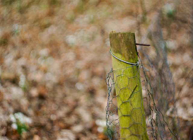 Just a fence post!