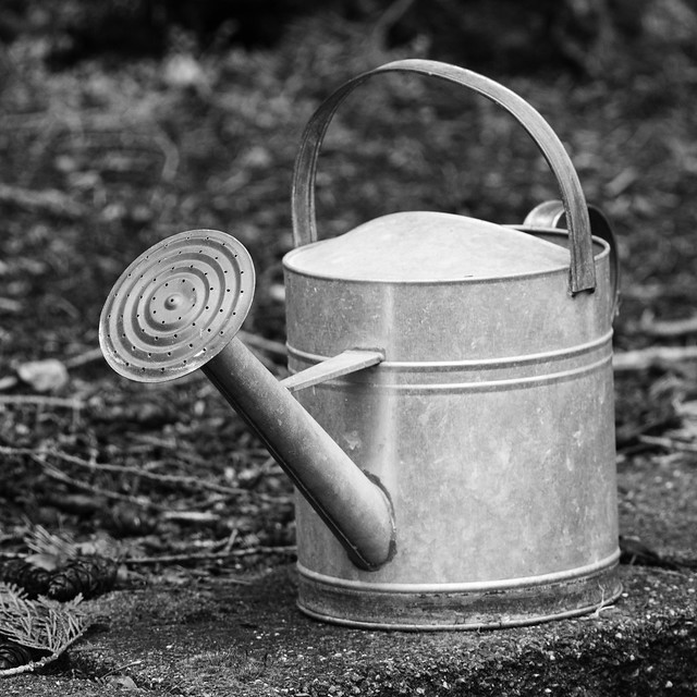 Watering Can in the Garden.