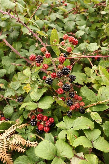 Hedge Found Harvest