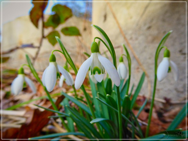 -blooming spring-