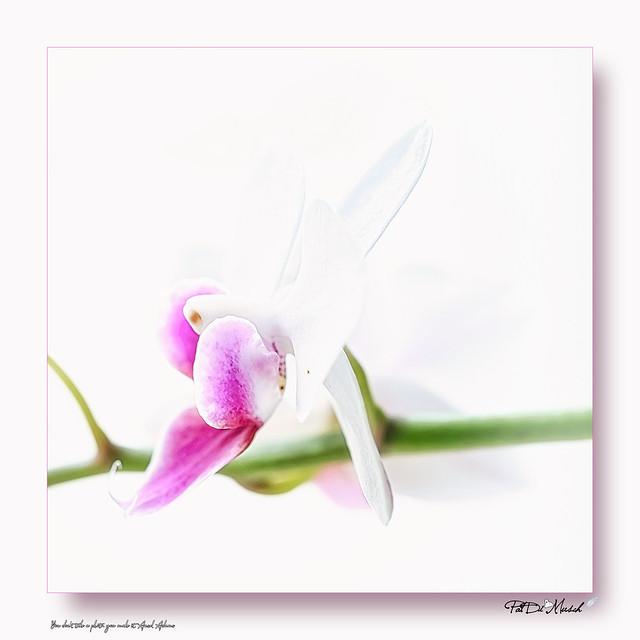 Orchidées 21.1 S07_22.02_DSC5357_D