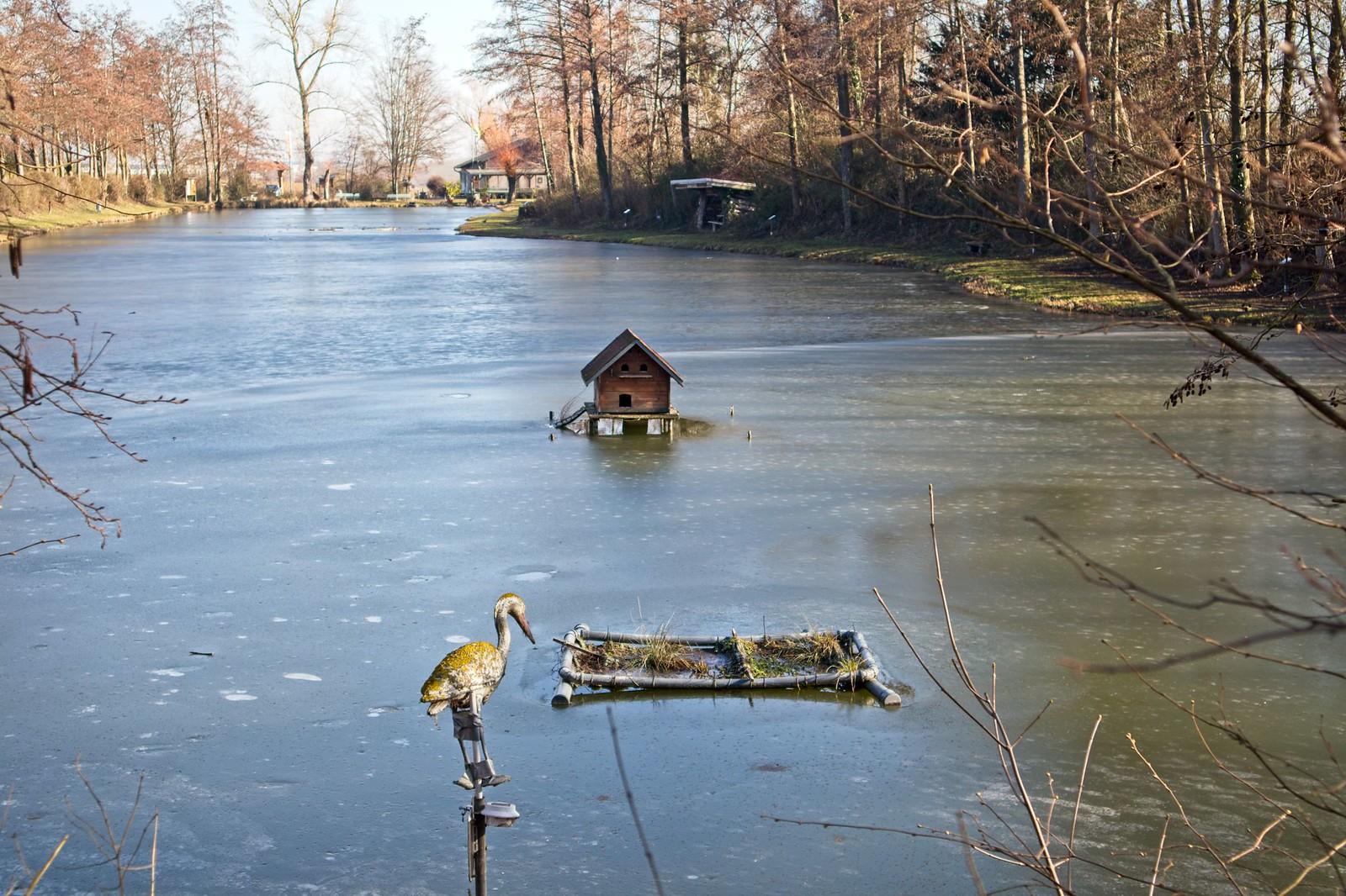 Teich vom Angelverein Bodenheim