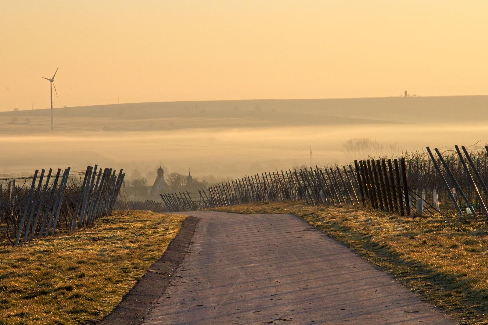 Morgennebel über Mommenheim