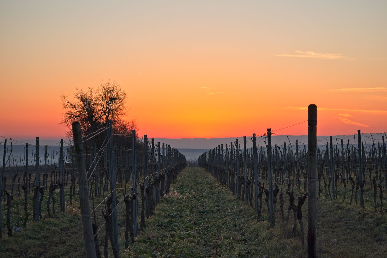 Sonnenaufgang am Wingertshäuschen auf dem Winkel (Zornheim) von Selzen zum Lörzweiler Kreuz mit Sonnenaufgang am Wingertshäuschen auf dem Winkel