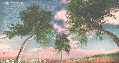 The Little Branch - Cottonwood Tree - UBER
