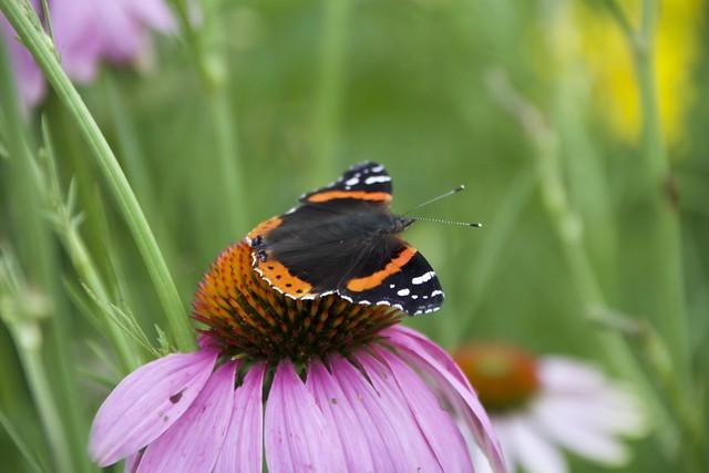Toronto Ontario ~ Canada ~ Edwards Gardens ~ Botanical Garden - Butterfly