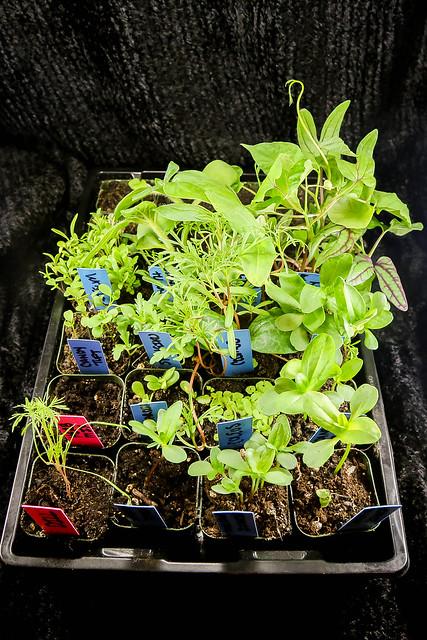 2.26.2021_garden_seedlings.24