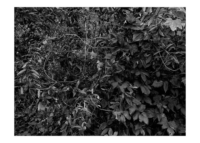 Vines and bushes