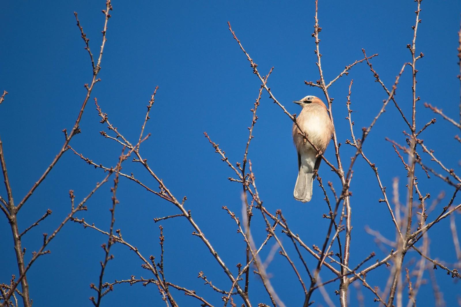 Vogelwelt bei Harxheim
