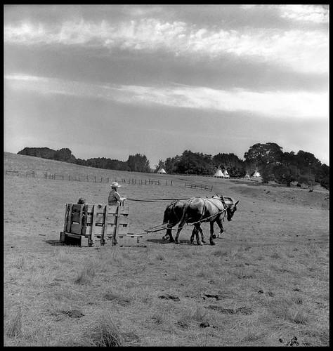 UCSC Farm Horse Cart Teepees #72080308