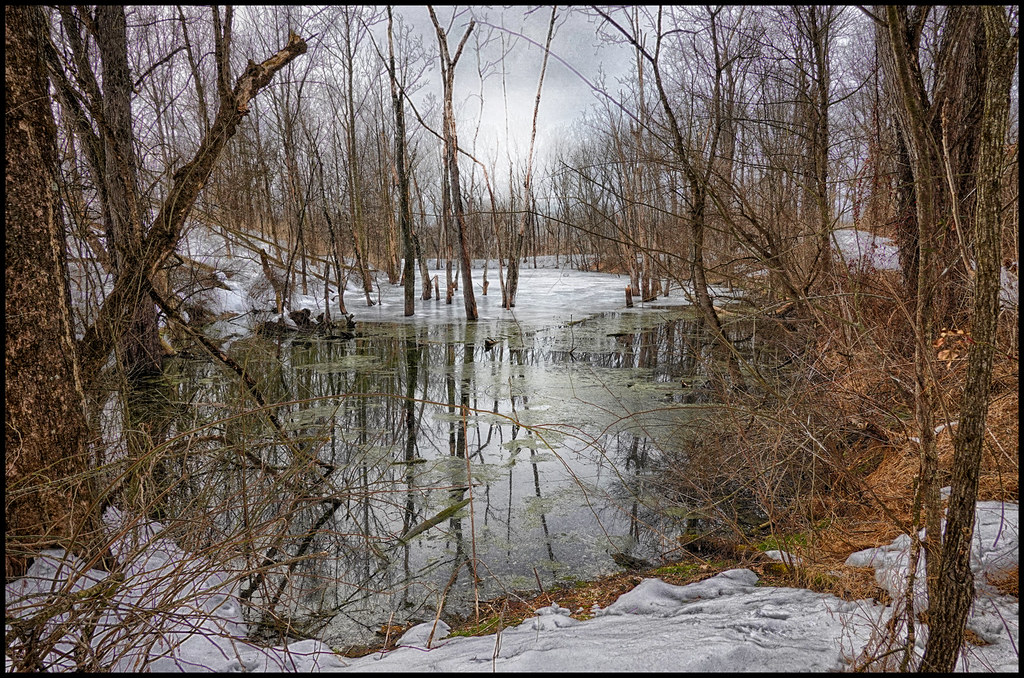 2-26-21 - The Wood Duck Pond - 1