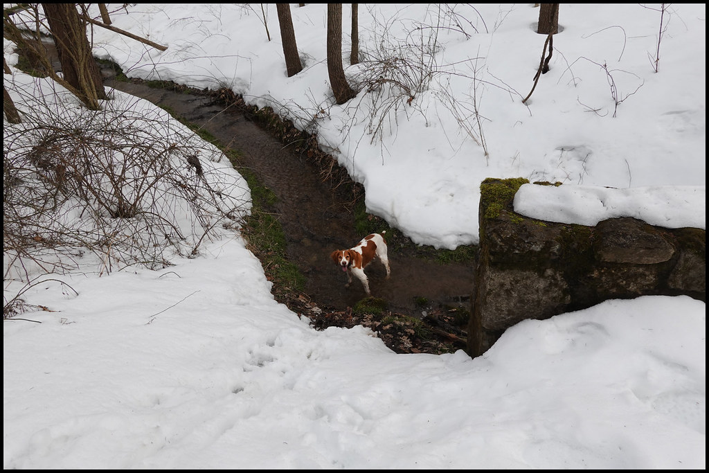 2-26-21 - Joy cooling off in the icy brook