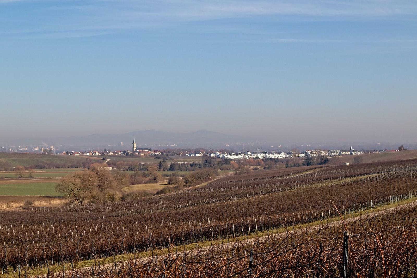 Blick nach Bodenheim