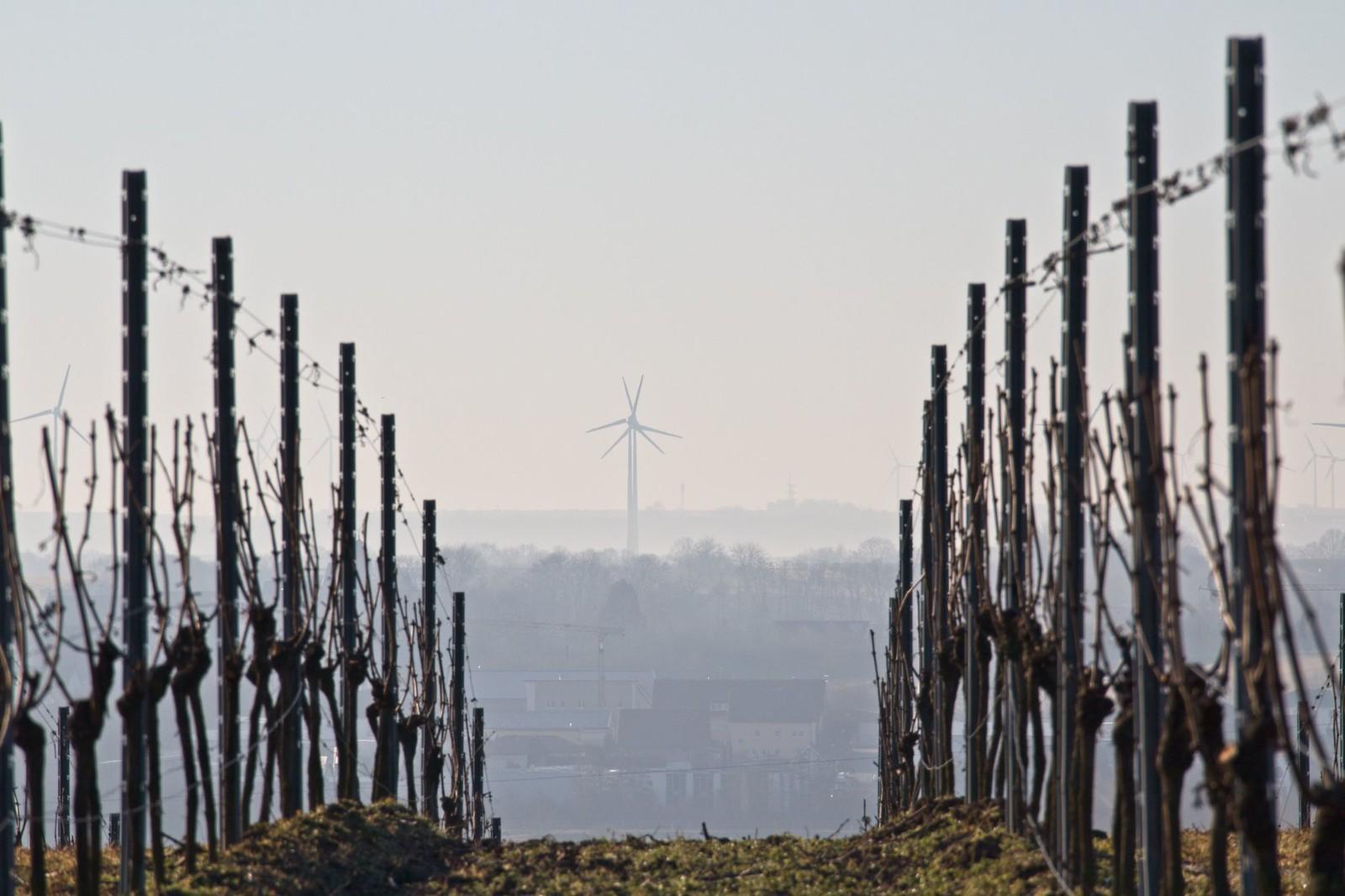 Rebstöcke und Windräder über Harxheim