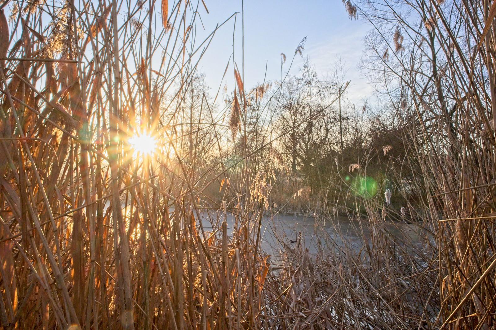 Biotop Rohrwiesen bei Zornheim