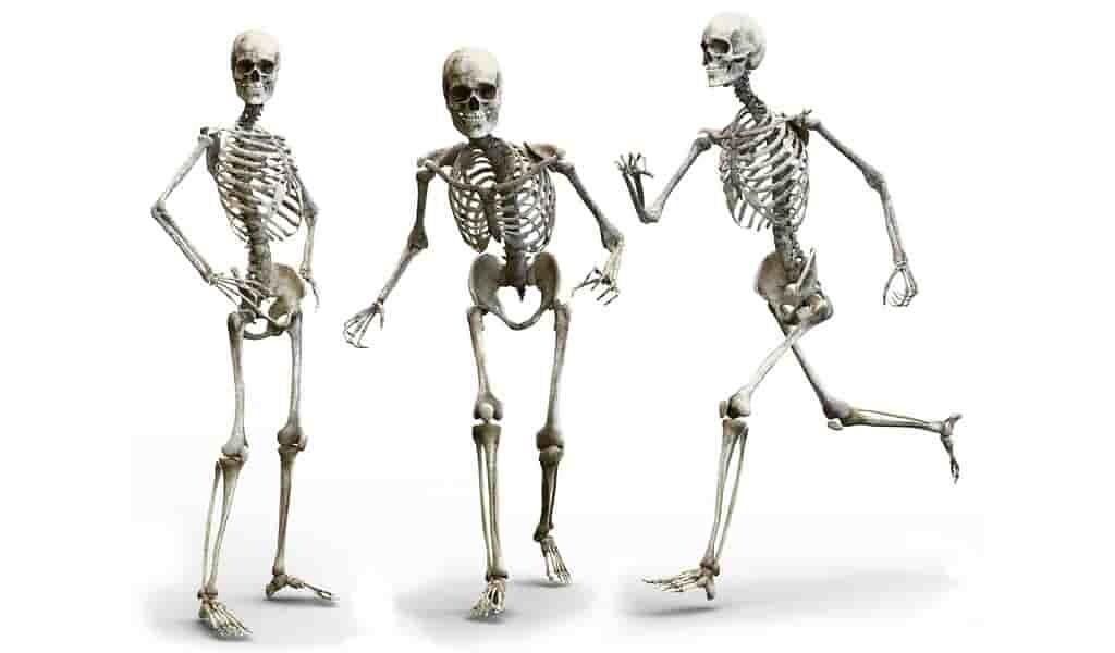 Une nouvelle cible pour les maladies du squelette
