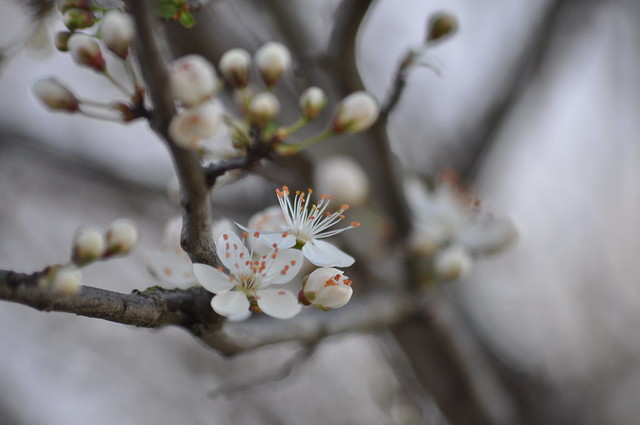 Le printemps est arrivé..sort de ta maison..