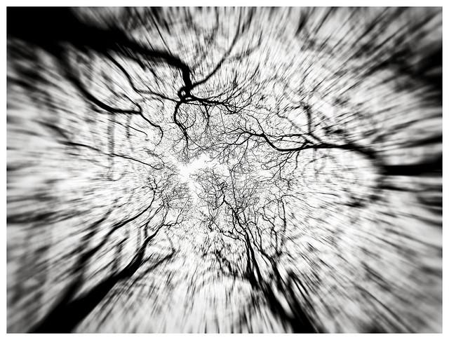 150 Trees