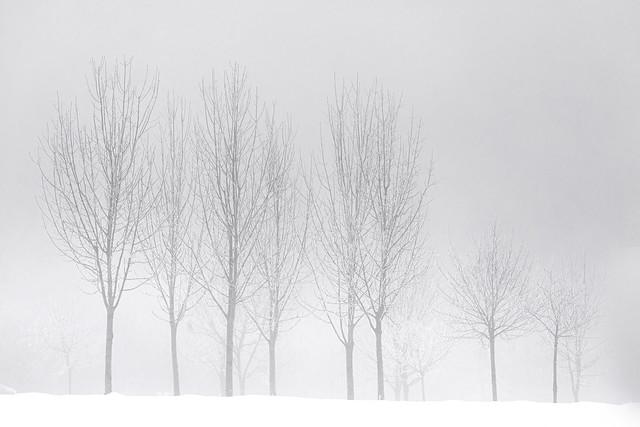 Árboles, niebla y nieve...