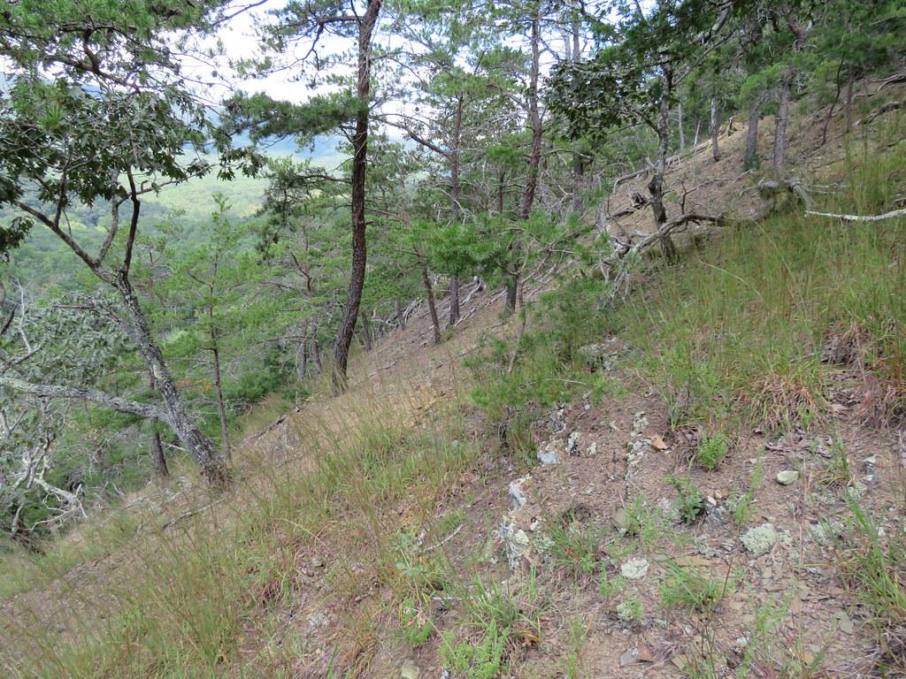 Shale Barrens upper slope