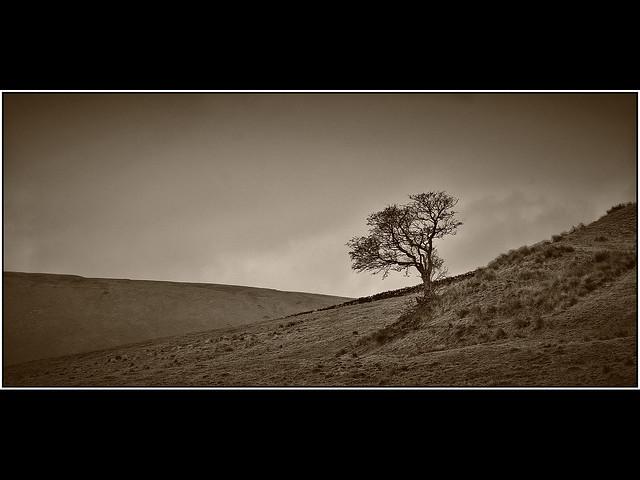 Lonesome ( Explore 26th February)