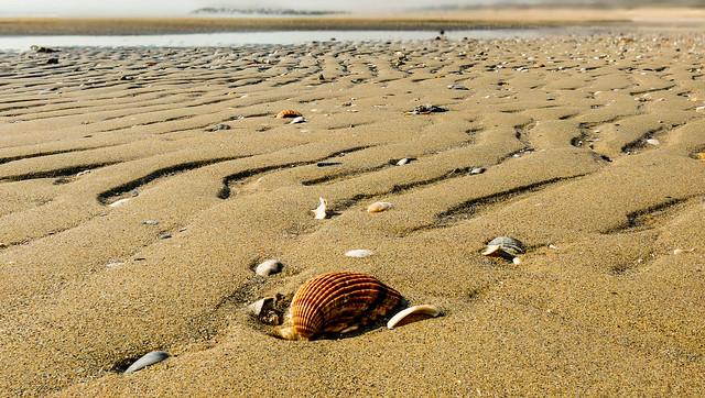 Bassa marea - low tide