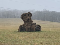 Hay Bale Bear in the rain