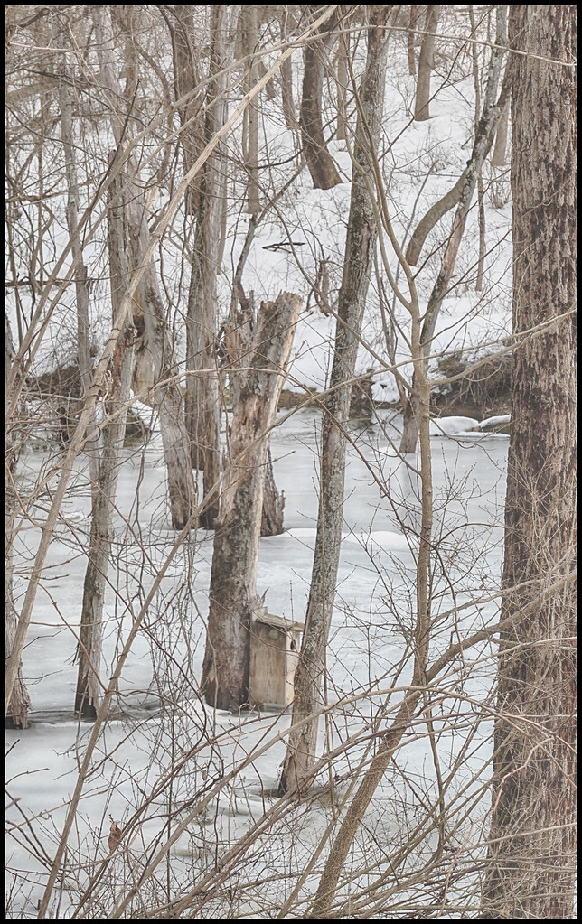 2-26-21 - The Wood Duck Pond - 3