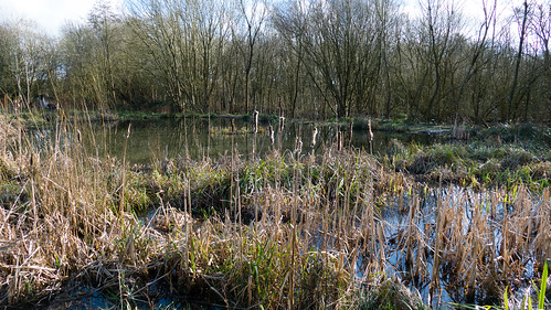 Old Nursery pond in swampy surrounds