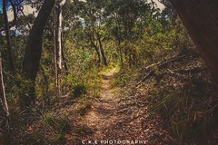 Bush walking in Ophir nsw
