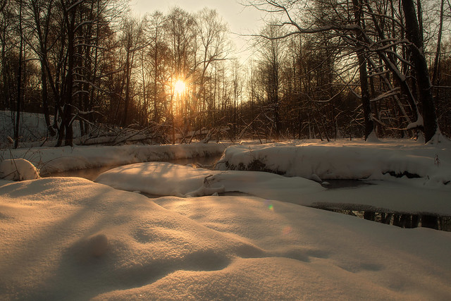Winter Evening in the Forest
