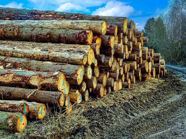 Holzstämme / Logs