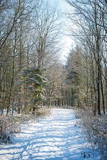 Itzehoe 210212 - Klosterforst im Schnee - DSC_1740