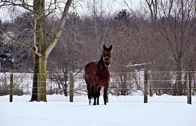 Wonders of Winter-#56