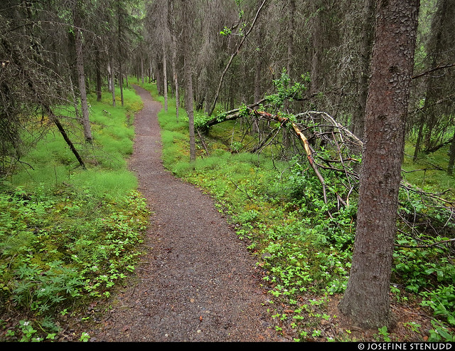 20180705_02 Rock Creek Trail through the forest in Denali National Park & Preserve, Alaska