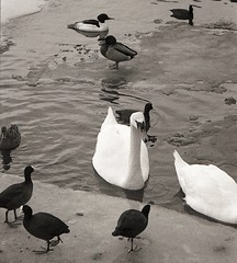 Birds and ice