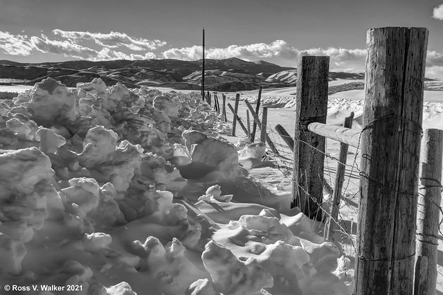 Winter Fenceline