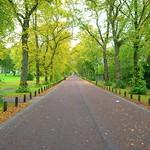 Tree lined Moor Park, Preston