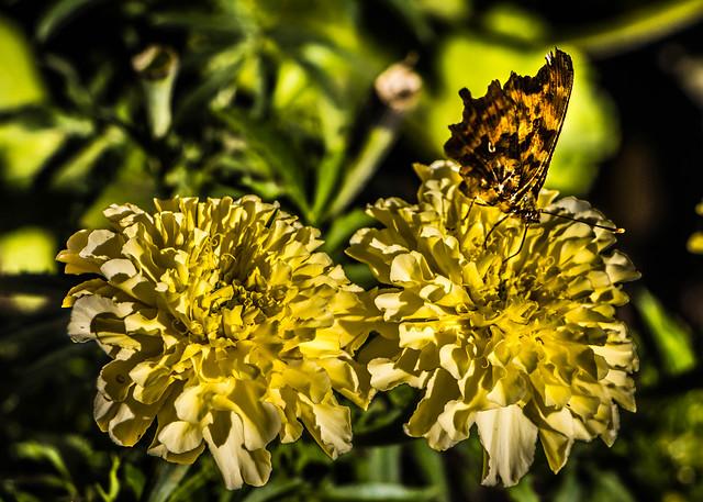 2 Flowers & 1 Butterfly