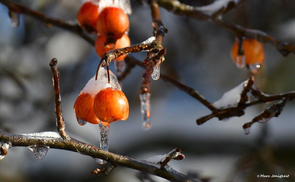 Tiefkühlfrüchte // frozen fruits