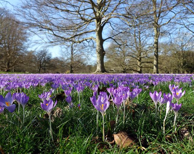 spring is springing....