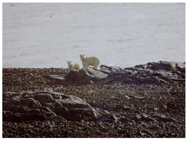 World Polar Bear Day (on Explore)