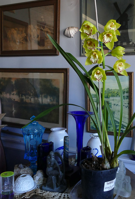 in the living room, Cymbidium Tower of Gold hybrid orchid
