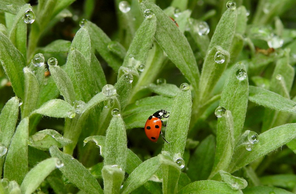 first ladybug after winter break